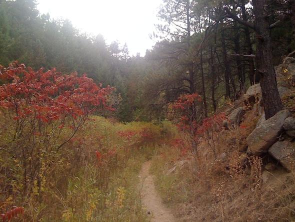 anne-white-trail