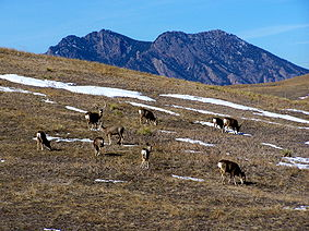 Rocky Flats today<br />(Photo: US Fish and Wildlife Service)